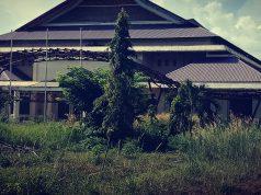 Kondisi Gedung Abdul Rauf Kuansing yang sudah dikelilingi semak belukar